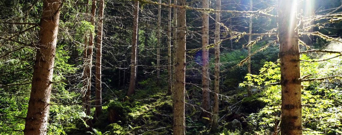 Wald im Rasner Biotop